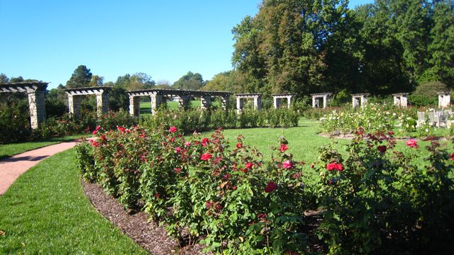 Loose Park Rose Garden Is Prime Time At Home In Kansas City