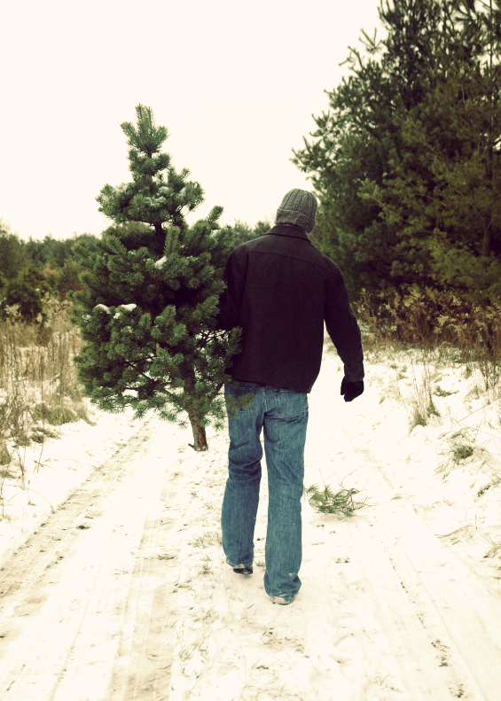 Tree Farm - Ten Kansas City Christmas Tree Farms - At Home In Kansas City With