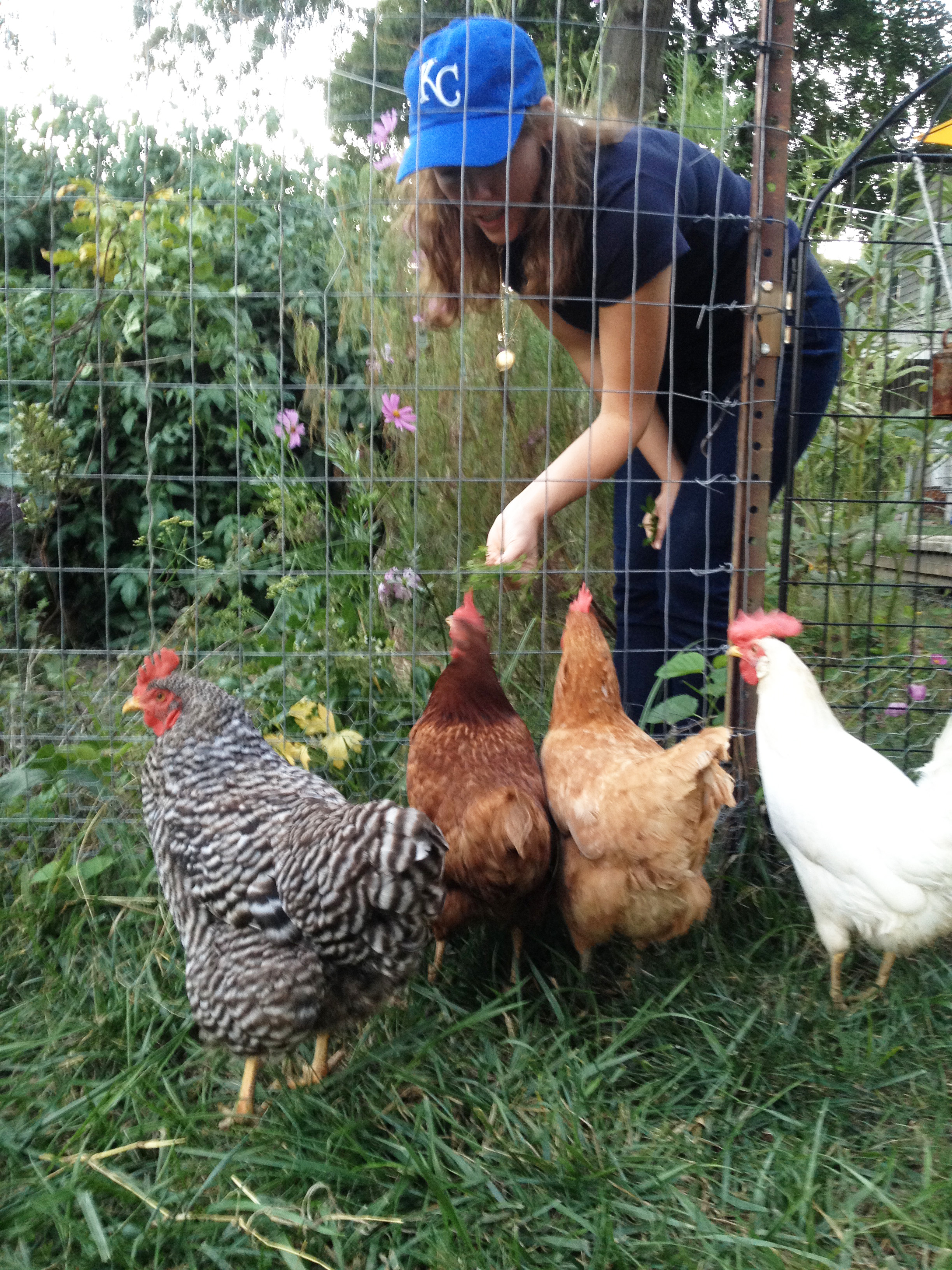 photo of lady feeding four chickens